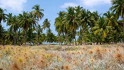 लक्षद्वीप - भारतकोश, ज्ञान का